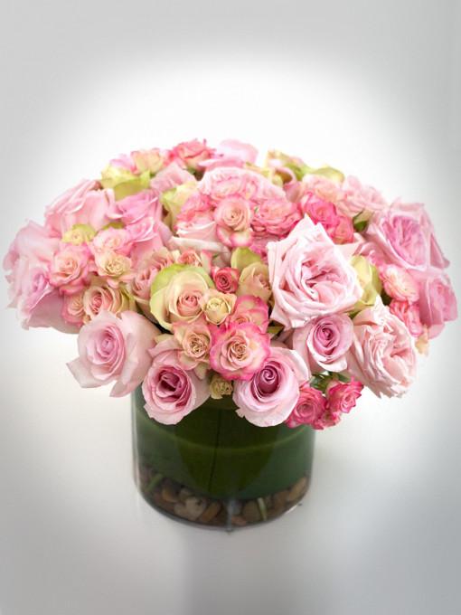 Striking Roses