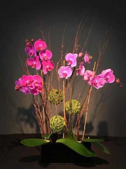 Multiple Phalaenopsis Orchid